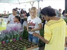 Montes Claros recebe feira de flores, com exposição no Centro da cidade - Cerca de 200 espécies estão à venda.