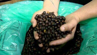Café especial é preparado e vendido em propriedade em Pedra Azul - Cuidados fazem com que a experiência do café natural seja única.