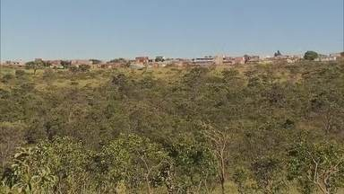 Comunidade do Recanto das Emas quer que área verde seja transformada em parque - Durante esta semana, a Redação Móvel mostrou falta de segurança, pedido de reforma de praça e de construção de viaduto. Reportagens sugeridas por moradores da região.