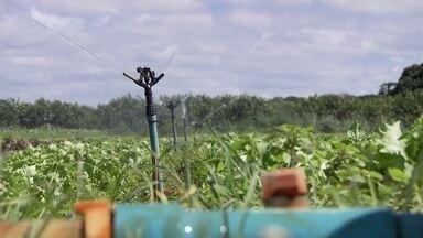 Seca preocupa produtores rurais no DF - Com pouca água, eles já reduziram a área plantada.