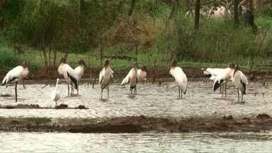 Sexta-feira deve ser de mais chuva na região Noroeste - Novamente, as chuvas mais volumosas do Paraná estarão concentradas na região. Mesmo assim, não chega a esfriar.