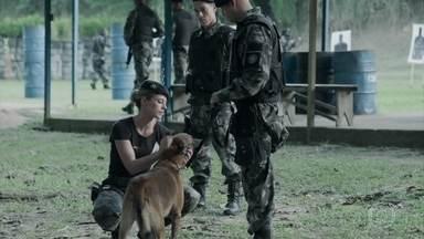 Jeiza treina cão farejador - O animal consegue encontrar substância escondida pela policial