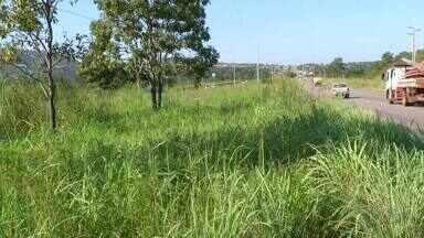 Mato alto no perímetro urbano da TO-050 em Palmas preocupa moradores e motoristas - Mato alto no perímetro urbano da TO-050 em Palmas preocupa moradores e motoristas