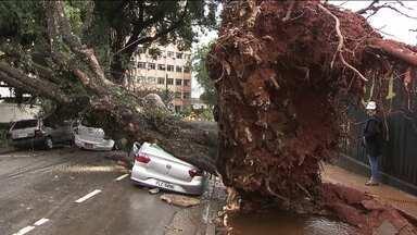 Dia de chuva e a capital enfrenta, de novo, quedas de árvores em pelo menos 16 locais - Toda vez que chove forte, as árvores viram um problema. Um problema que não para de crescer e que pode ser traduzido nos números que o SP2 conseguiu via lei de Acesso à Informação.