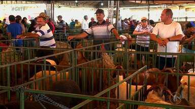 Expectativas de vendas na Caprishow são altas - Os criadores que tiveram prejuízos com a seca devem vender animais pro preços mais baixos
