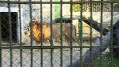 Interdição do Zoológico do Parque da Cidade prejudica comerciantes - Interdição do Zoológico do Parque da Cidade prejudica comerciantes.