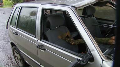 Galho de árvore atravessa para-brisa e banco de carro e quase atinge menina - A menina foi salva por um passageiro que estava no banco de trás do automóvel.