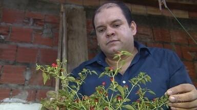 Horta caseira vira opção de renda em Manaus - Orgânico, livre da agrotóxicos e feito em casa. Essa é a proposta do Júlio, ele é agrônomo, e há oito anos deixou o Rio Grande do Sul para morar na capital amazonense.