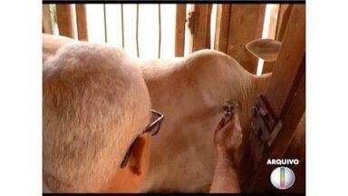 Vacinação contra febre aftosa termina nesta quinta-feira (30) - Em Minas, a expectativa é de imunizar quase 24 milhões de bovinos.
