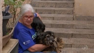 Número de cães com leishmaniose deixa alerta moradores de Votorantim - O número de casos de cães com Leishmaniose causa alerta aos moradores de Votorantim (SP). Após analise de coletas de sangue de centenas de cães, a cidade foi classificada como local transmissor da doença.