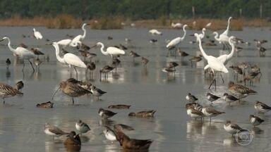 Reserva natural na costa sul da China abriga 400 espécies de aves - Quarenta e nove delas estão ameaçadas e são consideradas de interesse mundial. Local se transformou em ponto de observação de aves.