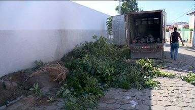 Corte de árvores no bairro Lagoa do Meio, em Linhares, é flagrado pela TV Gazeta Norte - Segundo a prefeitura, derrubada de árvores foi autorizada.