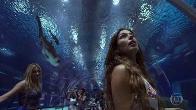 Rita aceita trabalhar como sereia no aquário - Paraense visita o viveiro de animais marinhos e já se imagina nadando entre os peixes