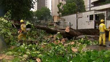 Chuvas derrubam árvores e causam transtornos no Grande Recife - Árvore caiu na Zona Norte do Recife e interditou trânsito