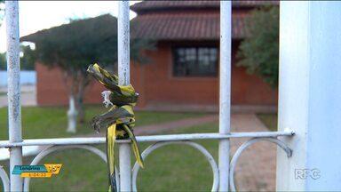 Duas pessoas morrem e duas ficam feridas em festa em Foz do Iguaçu - A festa Rave foi numa chácara alugada.