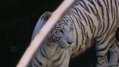 Zoológico de Brasília cuida de animais com risco de extinção - Muitos dos animais expostos no Zoológico de Brasília estão em extinção.