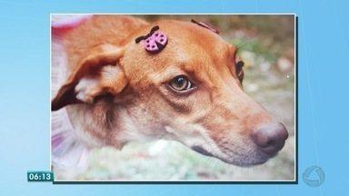 Sessão fotográfica com cães e gatos abandonados tenta estimular a adoção de animais - Sessão fotográfica com cães e gatos abandonados tenta estimular a adoção de animais.