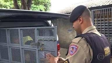 PM faz operação de combate ao tráficos de drogas e prende dois suspeitos em BH - A ação partiu de denúncias da comunidade por meio do telefone 181, da corporação.