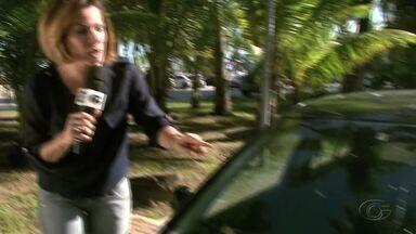 Coqueiros carregados oferecem riscos na orla de Maceió - Coco caiu e trincou o para-brisa de um veículo. Especialista alerta para o que deve ser feito.