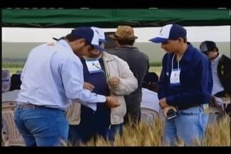 """Nova linhagem de trigo é desenvolvida em Uberaba - A cultivar, também chamada de """"Cerrado Tropical"""", está sendo desenvolvida em Uberaba e o trabalho representa uma nova fase para o desenvolvimento da pesquisa agrícola no município."""