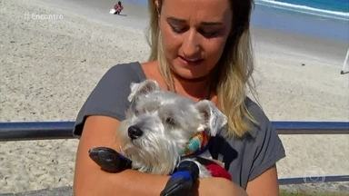 Pesquisa aponta que falar com animais é sinal de inteligência - Rita Ericson explica como funciona a comunicação para os cachorros. Elizangela e Allan Souza Lima falam sobre a relação deles com os animais