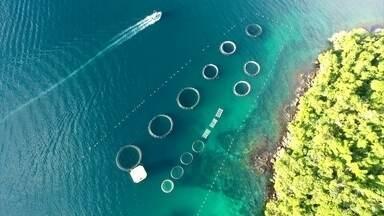 Fazenda marinha na Ilha Grande é exemplo para o país e o mundo - Fazenda tem cerca de 8 mil peixes e 400 mil vieiras. Capacidade e velocidade de produção chamaram a atenção da FAO.