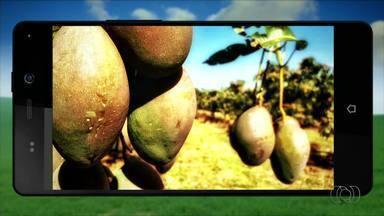 QVT do Campo: telespectadores participam do programa com fotos - QVT do Campo: telespectadores participam do programa com fotos