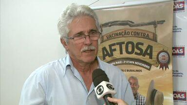 Alagoas chega a quase 100% na primeira etapa de imunização contra a aftosa - Estado continua buscando conseguir o status de zona livre da aftosa.