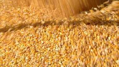 Fórum discute a conquista de mercados para o milho - Fórum discute a conquista de mercados para o milho.