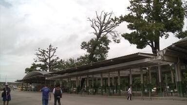 Árvore que ameaça cair interdita plataformas de terminal em Paulista - Passageiros do Terminal Pelópidas Silveira enfrentaram transtornos para pegar ônibus.