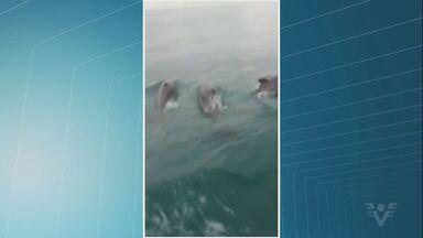 Aparecimento de golfinhos chama a atenção de pescadores da região - Animais são comuns na costa da Baixada Santista, segundo especialista.