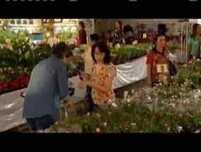 12ª edição da Festa das Flores colore a Praça dos Pioneiros em Valadares - Evento começou nesta quinta-feira (13) e vai até domingo (16).Além da exposição de flores, haverá programação cultural.