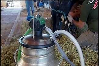 Vaca de Araxá é campeã em uma das principais exposições de pecuária leiteira do país - MGTV foi conferir por que do sucesso. Metade das costas da vaca será leiloada no dia 15 de julho no parque de exposições da cidade.