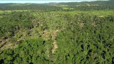 Área de proteção da mata do Jamanxim ainda é polêmica - Governo manda para Câmara terceira proposta de criação de APA. Ambientalistas dizem que proposta estimula a grilagem de terras.