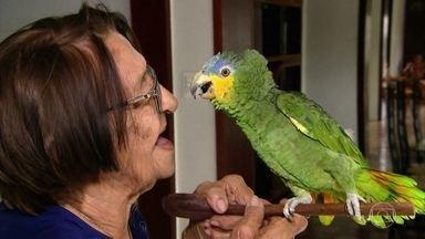 Família da Paraíba vai à Justiça para que idosa possa ficar com papagaio - Dona Izaura tem o papagaio há 22 anos. Em 2010, o Ibama recebeu denúncia e mandou fiscais buscarem o animal. Caso foi parar na Justiça.