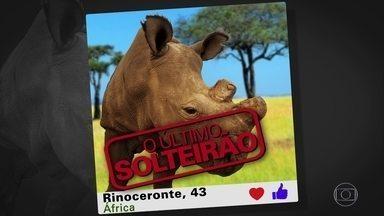 Rinoceronte adere a aplicativos de namoro para arranjar uma parceira - Só existem quatro rinocerontes-brancos-do-norte no planeta, e o objetivo é chamar a atenção para uma causa importante: salvar a espécie da extinção.