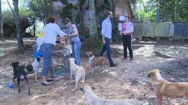 Cachorros são abandonados sem água e comida em ilha de Vitória - A principal suspeita da prefeitura é que os animais tenham sido deixados na ilha pelos donos.