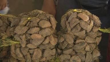 Produção de castanha teve maior queda em 11 anos no Amapá - Com a redução, o consumidor está sentindo isso no bolso isso.