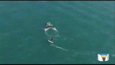 Baleia jubarte é vista próxima à praia do Engenho D´Água em Ilhabela - Turista que praticava esporte no mar passou perto dela.