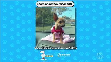 Confira fotos dos animais enviados por telespectadores da TV Rio Sul - Caminhada Amicão acontece no sábado (29), em Resende, RJ.