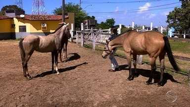 Telespectador do Estação Agrícola tira dúvidas sobre cólicas em cavalos - Telespectador do Estação Agrícola tira dúvidas sobre cólicas em cavalos.