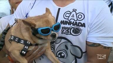 Inscrições abertas para a 5ª edição da Cãominhada em São Luís - Vacinação de animais, feirinha de adoção, concursos são algumas das atividades que vão ser realizadas na 5ª edição da Cãominhada promovida em São Luís pela Mirante FM.