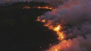 Estado de São Paulo registra 800 focos de queimadas no mês de julho, diz pesquisa - Seca é um dos motivos para o recorde de ocorrências.