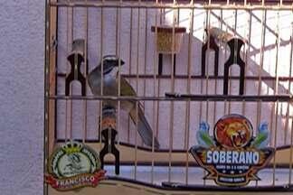 Moradores do Alto Tietê falam sobre criação responsável de aves - Criadores contam que seguem a legislação para criarem aves de maneira adequada.