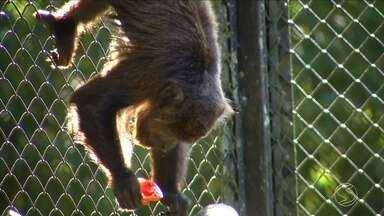 Dieta dos animais do zoológico de Volta Redonda, RJ, muda no inverno - No tempo frio também devem aumentar os cuidados com bichinhos de estimação.