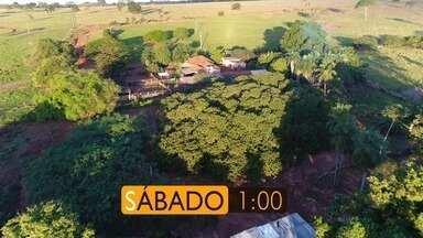 O maior cajueiro de Mato Grosso do Sul, neste sábado (05/08) no Meu MS - O maior cajueiro de Mato Grosso do Sul, neste sábado (05/08) no Meu MS