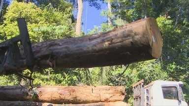 Mais de 33 mil hectares da Flona Jamari serão cocedidos pra aexploração em Porto Velho - Uma nova área da Floresta Nacional do Jamari poderá ser concedida para exploração sustentável, através do manejo florestal.