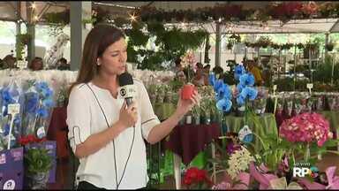 Expoflor de Maringá reúne mais de 400 espécies de flores - A exposição está sendo realizada na praça da prefeitura de Maringá.