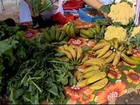 Feira de produtos orgânicos incentiva a agricultura familiar - Evento acontece em Presidente Prudente.