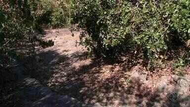 Moradores de assentamento sofrem com a falta de água após rio secar - Moradores de assentamento sofrem com a falta de água após rio secar